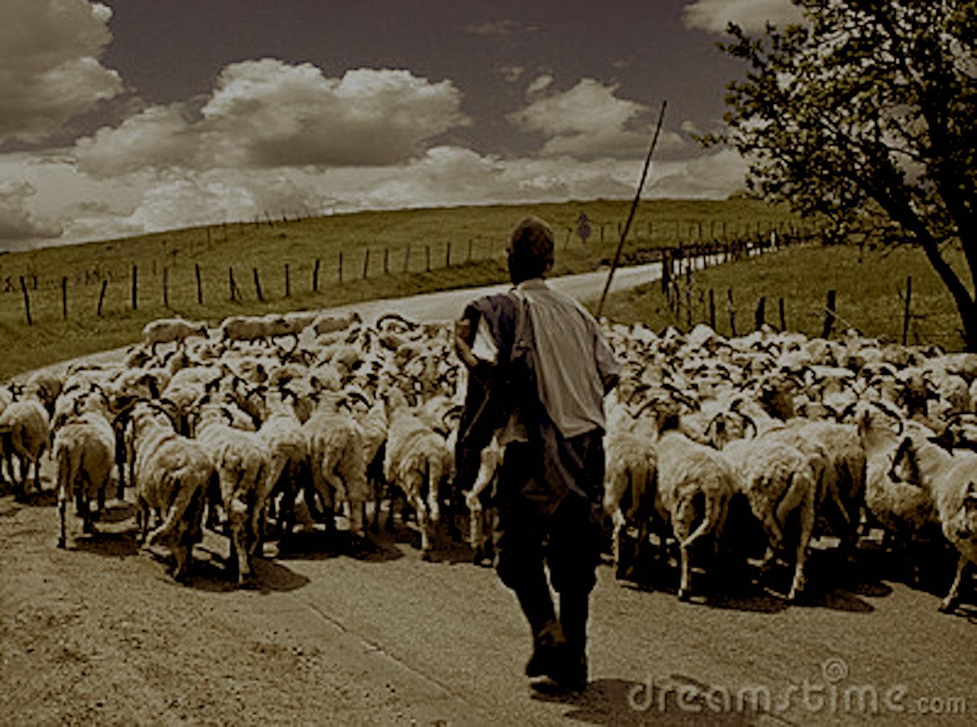 pastore pecore