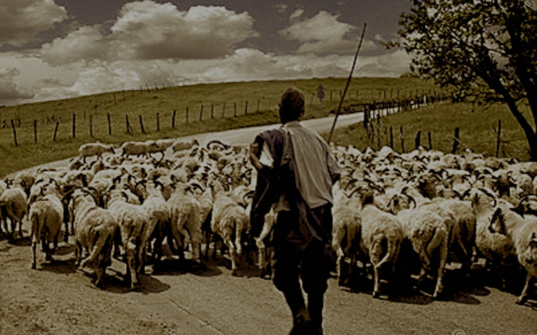 vita da pastore