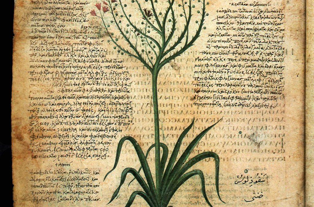 La cura con le erbe